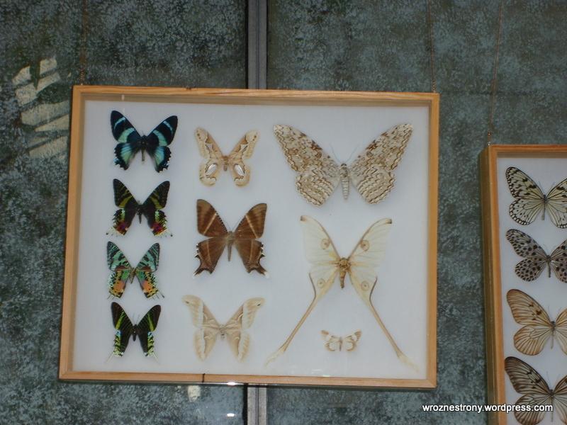 W 2008 roku można było zoabczyć różne gatunki motyli