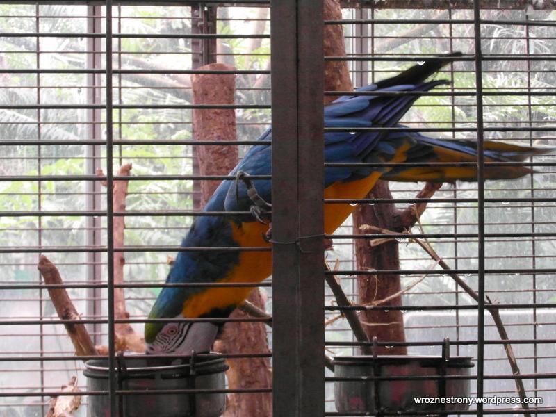 Papugi w palmiarni