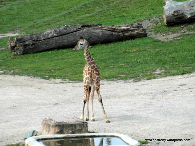 Zoo w Pradze