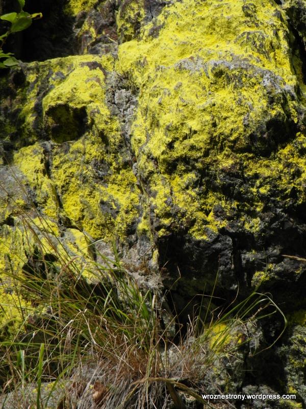 Charakterystyczny żółty mech porastający zbocza Śnieżnika