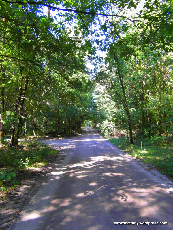 Przyjemna droga przez las