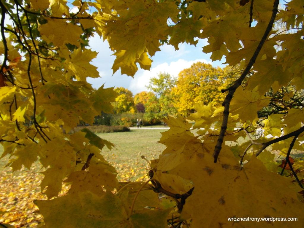 Wielu poznaniaków udało się na jesienny spacer