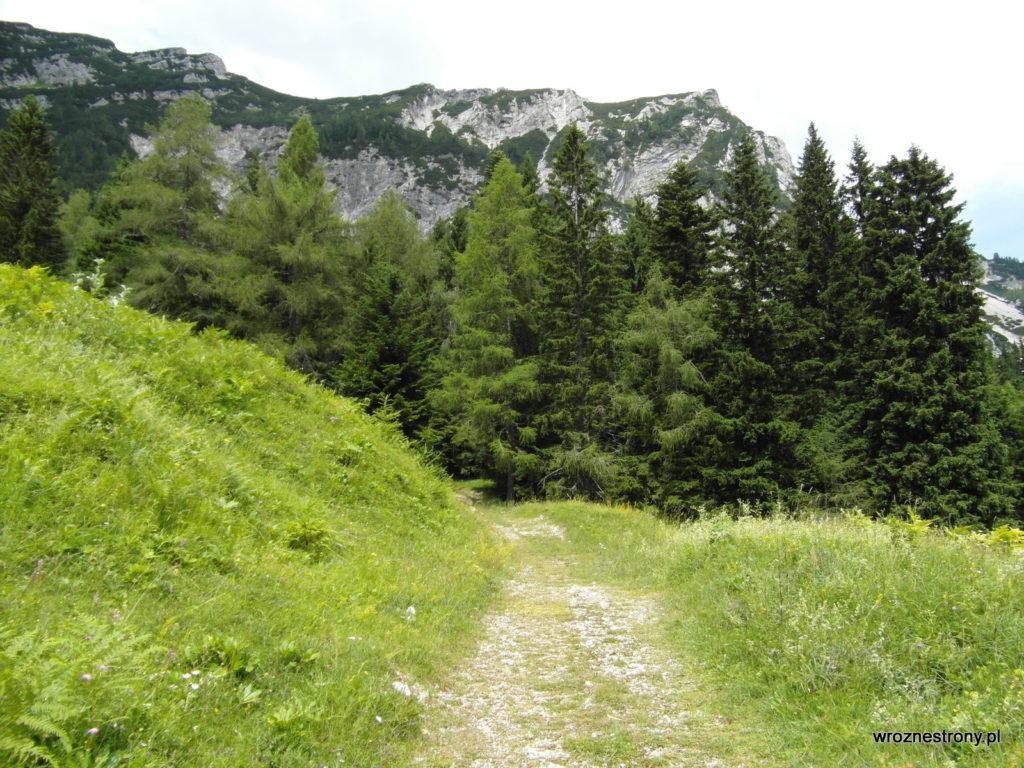 Szlak biegł przez łąki i lasy