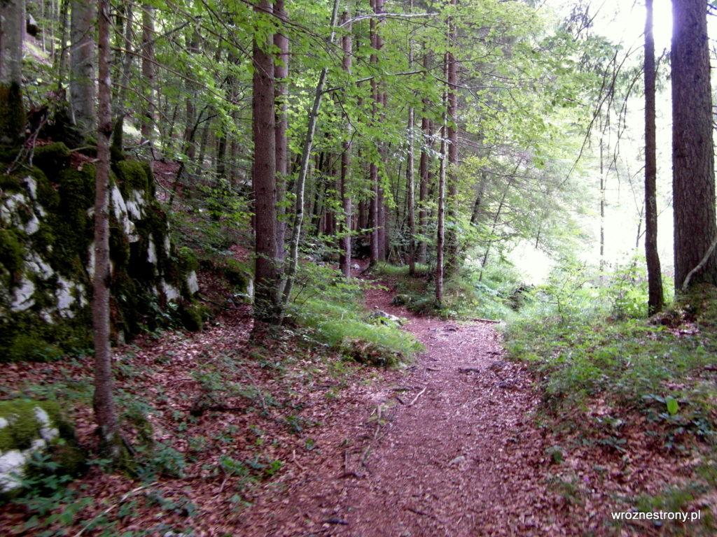 Częściowo szlak wiódł przez las