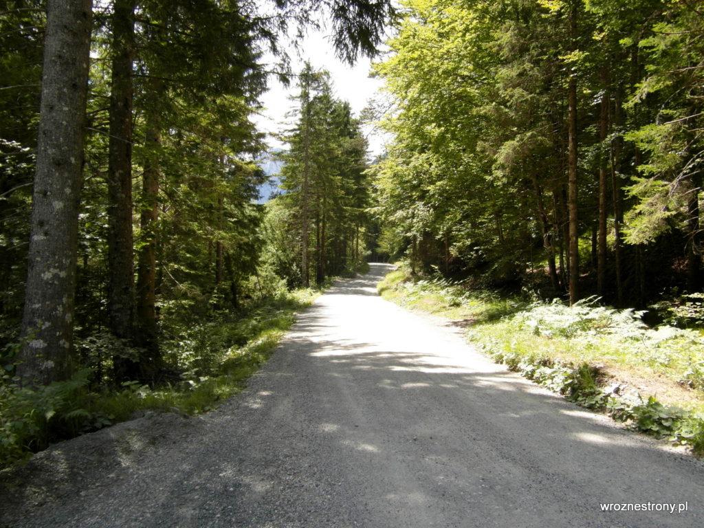 Szlak częściowo wiódł drogą, po której jeżdżą też samochody