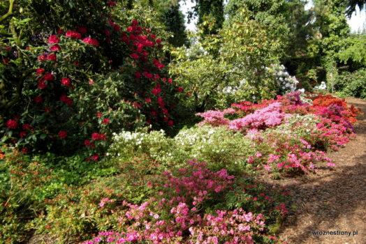 Arboretum w Kórniku
