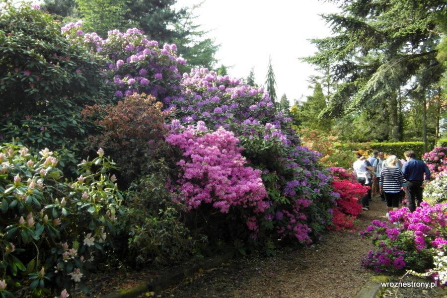 Arboretum w Kórniku - odwiedzających nie brakowało