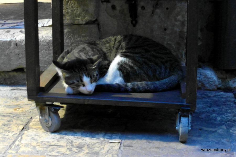 Ach te bałkańskie koty ;)