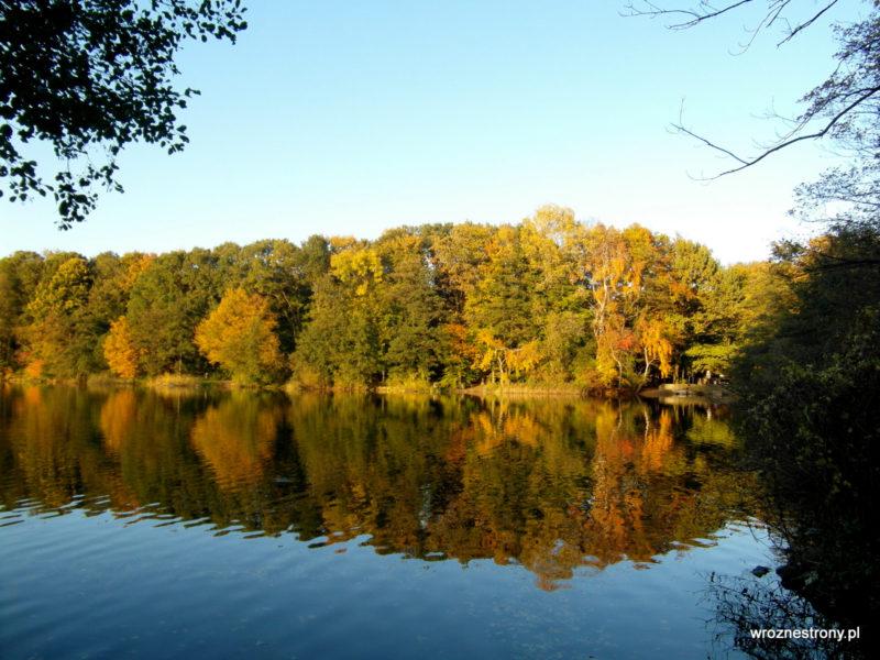 Wielobarwne drzewa nad Jeziorem Rusałka w Poznaniu