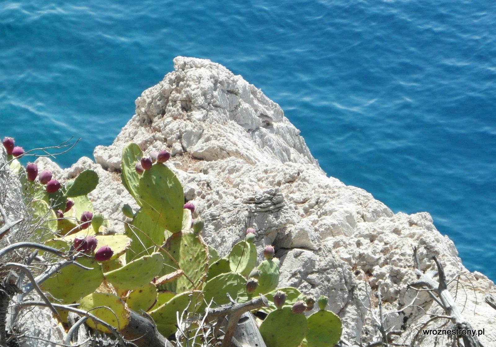 Roślinność śródziemnomorska