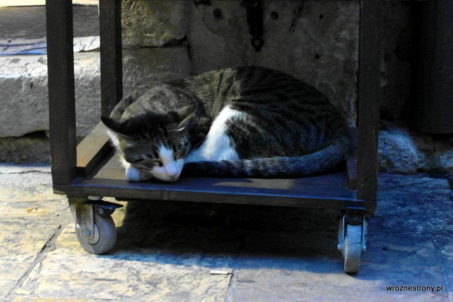 Koty są wszędzie w Kotorze ;)