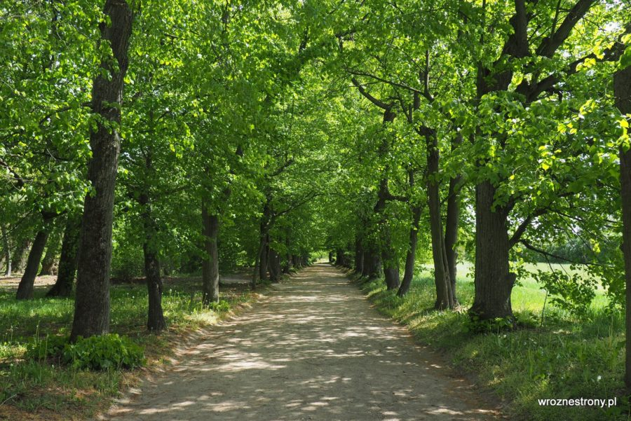 Park przy pałacu