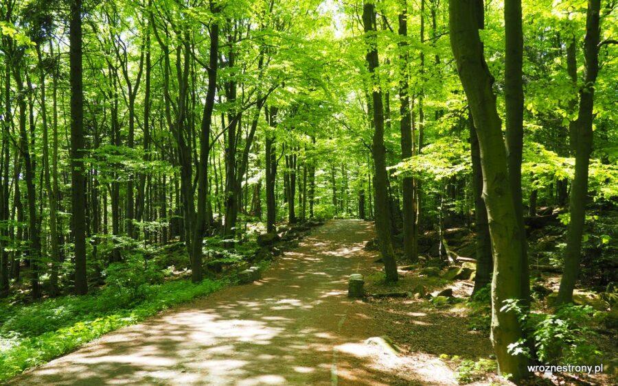 Żółty szlak - najłatwiejszy szlak na Ślężę